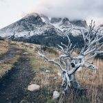 dead tree in front of mountains